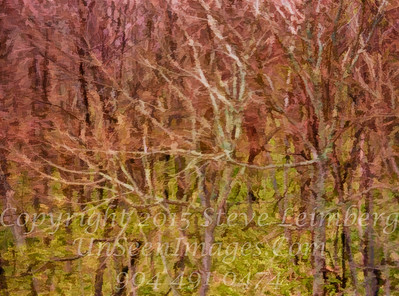 Trees Blurred Through Glass and Rain - Copyright 2017 Steve Leimberg UnSeenImages Com _DSF4748