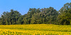 Clear Meadow Farms
