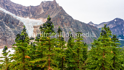 Pines and Angel Glacier