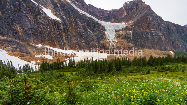 Cavell Meadows and Angel Glacier