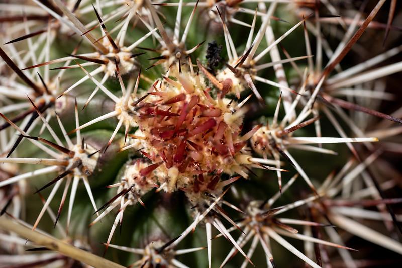 Cactus Macro