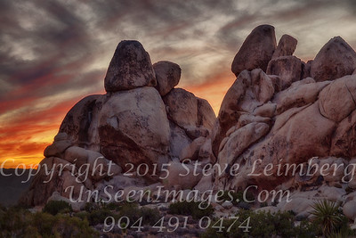 Sunset in Joshua Tree _Z2A1942