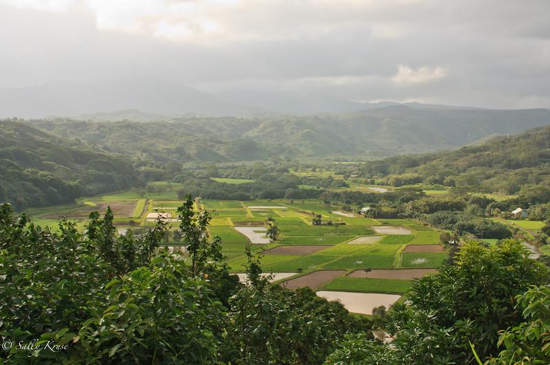 Overlooking the valley near Princeville, on the island of Kauai, Hawaii.