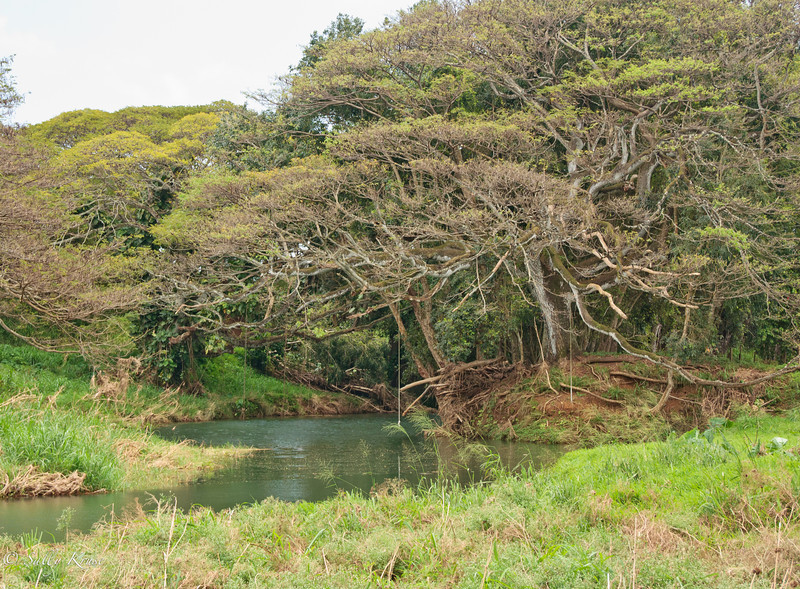 Swimming hole on the island of Kauai, Hawaii