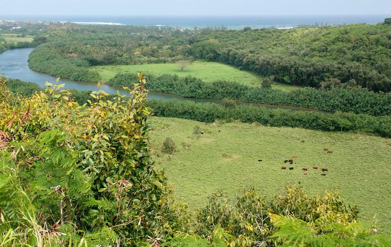 Pastureland near Kapaa, Kauai, Hawaii.
