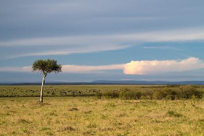 Sunset, Masai Mara, Kenya 15 October 2011