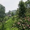 Road to Munnar