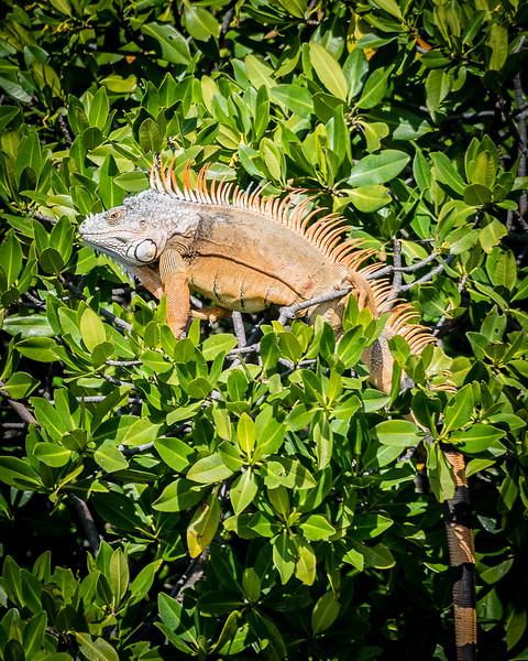 Photo by Norm Beaudette - unfetteredlens.smugmug.com