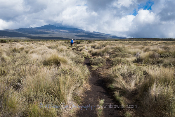 Kilimanjaro Day 2: Forest Camp to Shira Camp 1