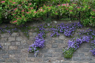 Spring flowers even grow out of the walls