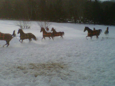 Some of the school horses excited to be outside right after a major snowfall.