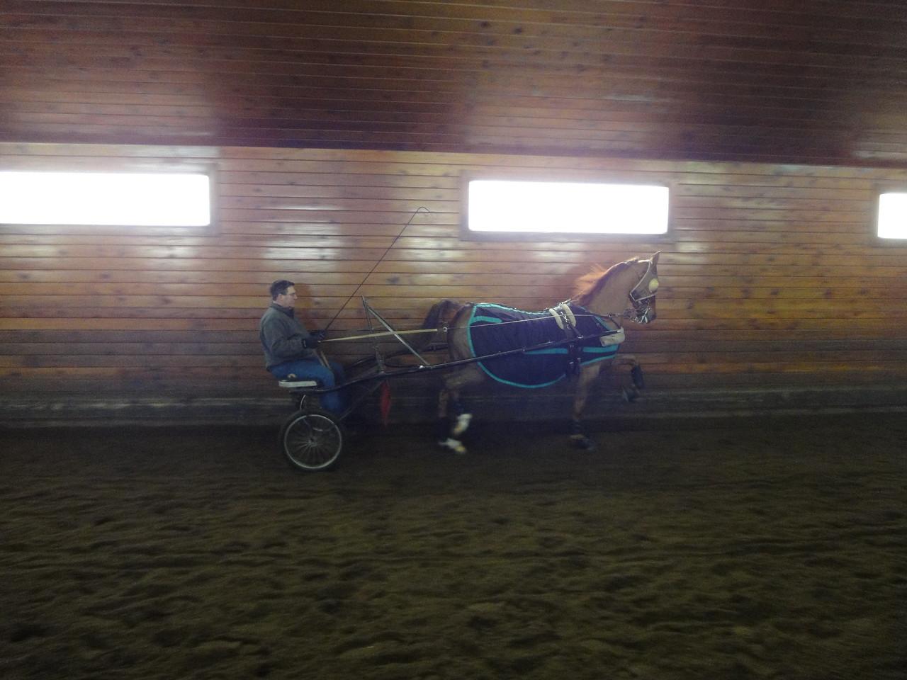 Scott exercising one of the show horses.