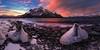 Magical Sunrise over Abraham Lake