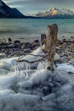 Icy Stump