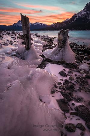 Icy stumps