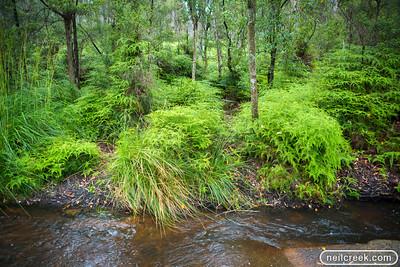 creek-131222-106