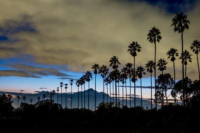 Elysian Palms