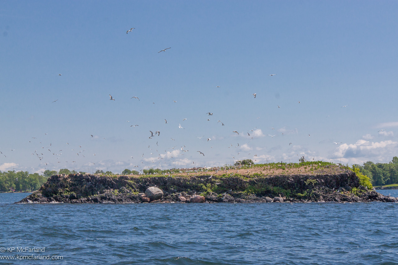 Poppasquash island tern colony