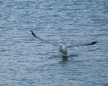 Lake Murray, Oklahoma  3-28-2010
