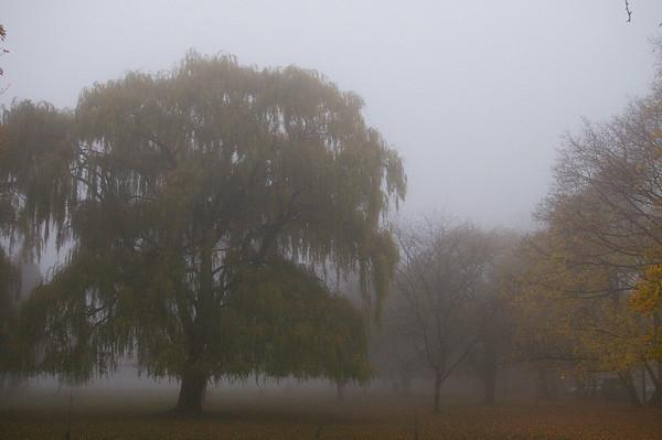 Lake Ontario foggy willow.