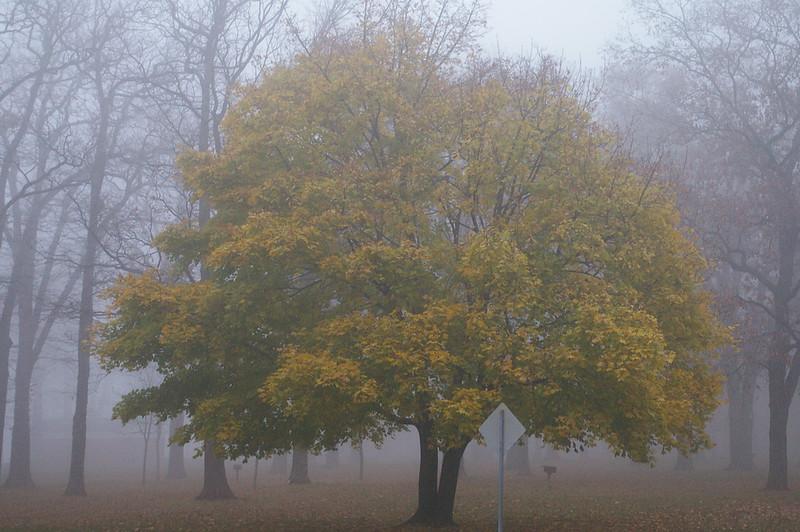 Lake Ontario foggy tree.
