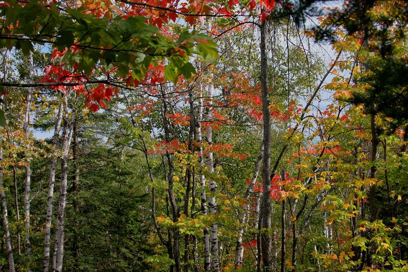 Spl Falls trail colors