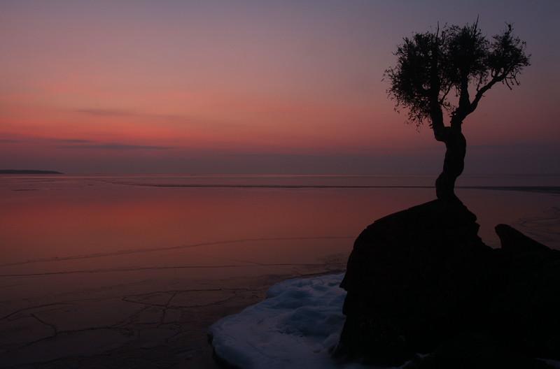 Spirit Tree at Dawn