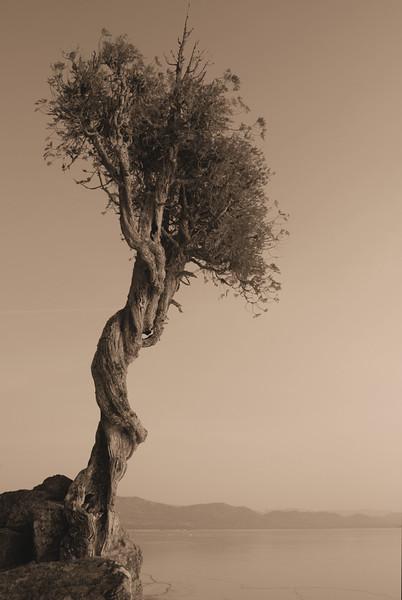 Spirit Tree Sepia