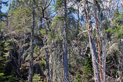 Ancient Forest on Hat Point