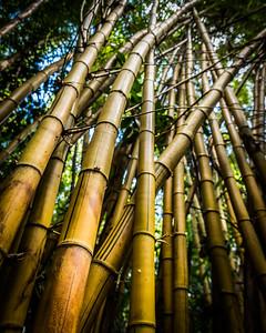 Big bamboo 2