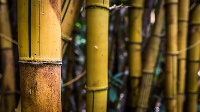Big bamboo 1