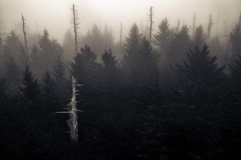 Foggy Morning, Clingmans Dome