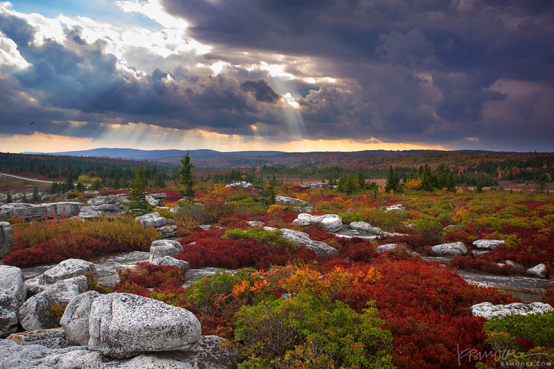The Dolly Sods Wilderness