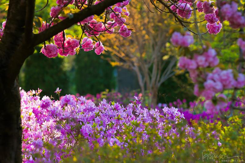 Golden Hour in the Garden