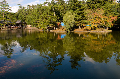 Nara park in Nara, Japan.