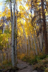 Mountain Path Frisco, CO, USA September 2010