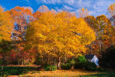 Fall in South Carolina