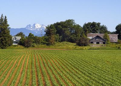 6989 - Sumas Corn Fields - 5x7