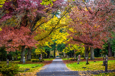 Fall color in Bellingham Cemetary