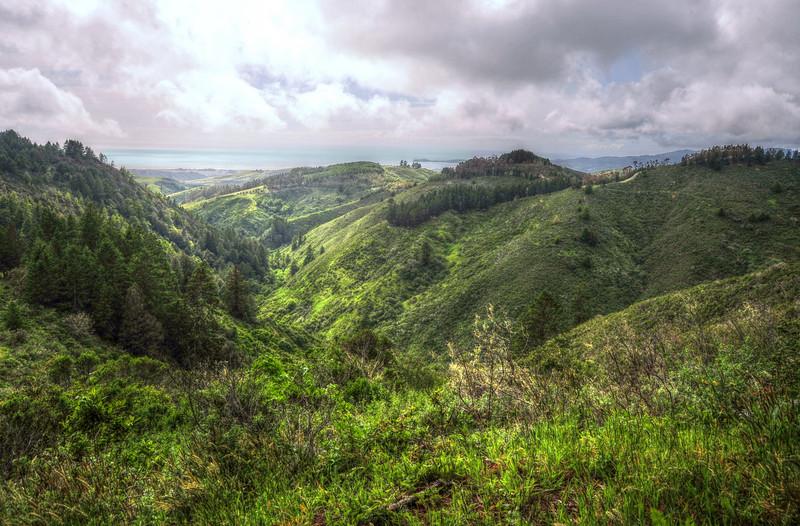 Purisima Redwoods Preserve, CA