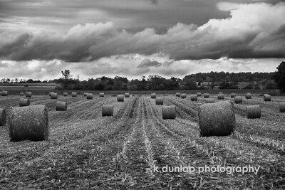 "10.22.14 = Harvest  ""Before the reward there must be labor. You plant before you harvest. You sow in tears before you reap joy."" ~Ralph Ransom  This photo is number FIVE of five in the black & white challenge. Thank you Carole King Murray for passing the challenge on to me.  Its was a great project.  Today I pass the B&W challenge onto photographer Curtis Budden."