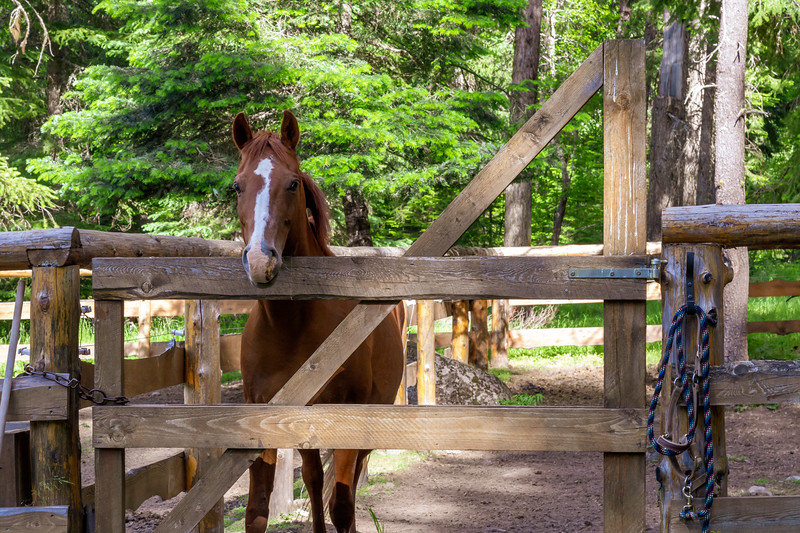 Horses of the Lodge