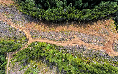 Logging Roads, Idiot Creek, Oregon