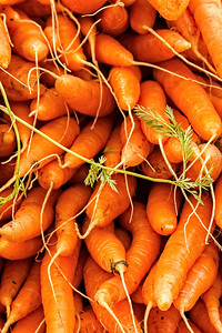 Stack of Carrots at Portland Farmers Market