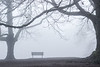 Bench in the Fog, Mount Tabot, Portland, Oregon