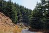 Barouk Cedar Forest Road