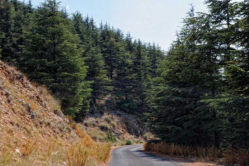 Barouk Cedar Forest Road