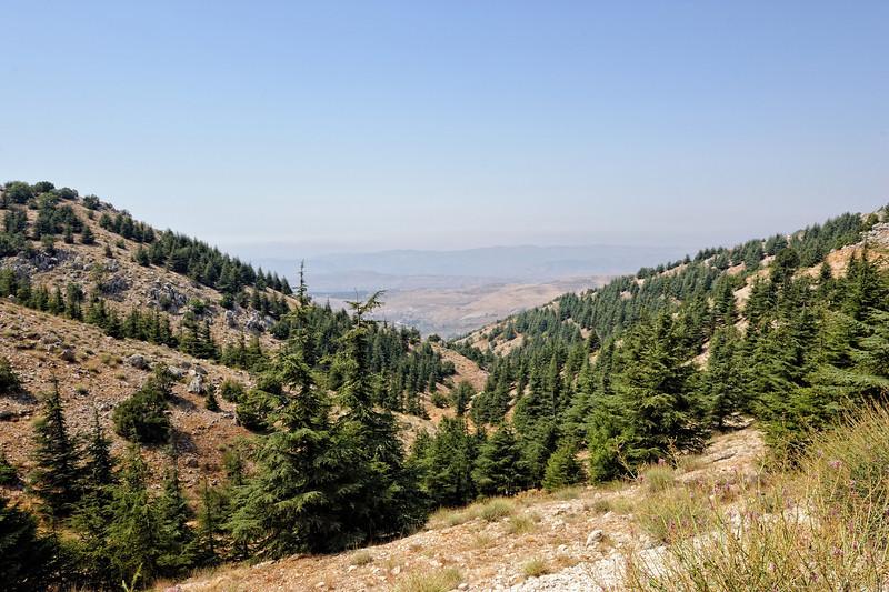 Barouk Cedar Valley
