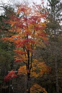 Letchworth State Park, NY so many small wonders.