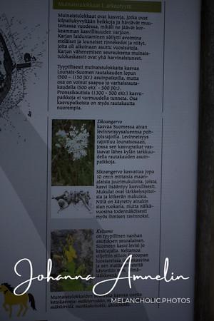liedon linnavuori kukat makro sisäfilepihvi 031